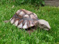 Schildkröte, Kunsthandwerk, Keramik