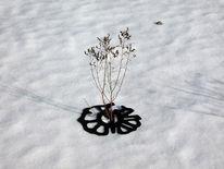 Pflanzen, Schnee, Osten, Installation