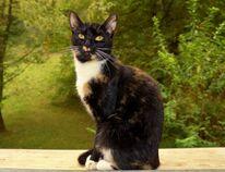 Katze, Erwartung, Natur, Fotografie