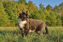 Katze, Landschaft, Herbst, Fotografie