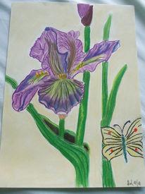 Zeichnung, Skizze, Zeichnungen, Schmetterling