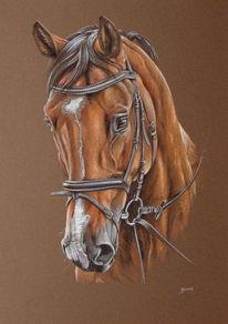 Pferde, Pony, Pferdeportrait, Pastellmalerei