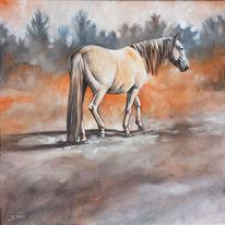 Pferde, Pony, Schimmel, Malerei