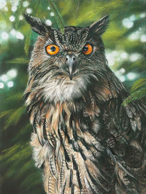 Pastellmalerei, Grün, Eule, Tierportrait