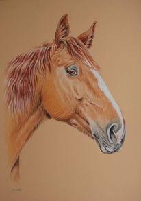 Tierportrait, Pferde, Pferdeportrait, Zeichnungen