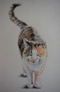 Katze, Buntstiftzeichnung, Katzenportrait, Glückskatze