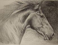 Galopp, Kohlezeichnung, Pferde, Zeichnung