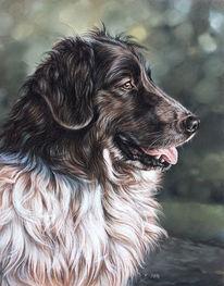 Hund, Tierportrait, Pastellmalerei, Zeichnungen