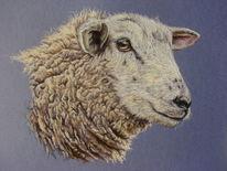 Tierzeichnung, Wolle, Tierportrait, Tiere