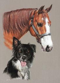 Pastellmalerei, Pferde, Tierportrait, Hund