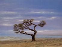 Wind, Natur, Landschaft, Realismus