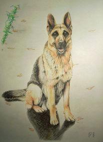 Buntstiftzeichnung, Hund, Portrait, Schäferhund