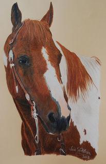 Pferde, Tierportrait, Portrait, Buntstiftzeichnung