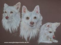 Weiß, Tierportrait, Hund, Portrait