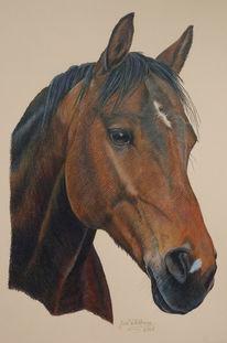 Pferde, Braun, Tiere, Zeichnung