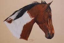 Gescheckt, Pferde, Tiere, Pferdemalerei