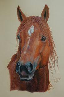 Natur, Pferde, Zeichnung, Buntstiftzeichnung