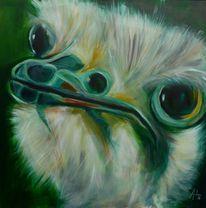 Emu, Grün, Tiere, Vogel