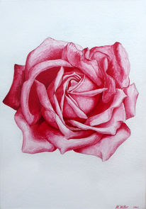 Rose, Malerei, Rot, Blumen
