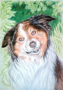 Natur, Hund, Tiere, Zeichnung