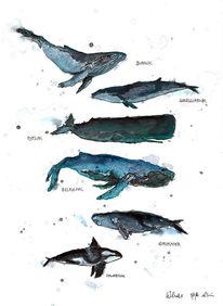 Linolschnitt, Ozean, Aquarellmalerei, Walarten
