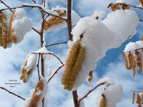 Südburgund, Schneehaseln, Winter, Fotografie
