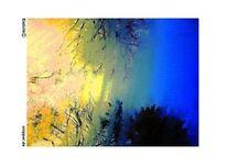Natur, Blau, Stadt, Baum