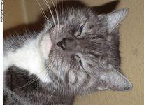 Tiere, Katze, Fotografie