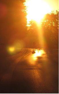 Sonne, Straße, Baum, Köln