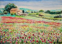 Mohnblumen, Sommerwiese, Blüte, Aquarell