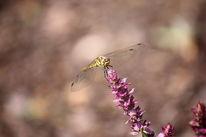 Schmetterling, Pflanzen, Naturschutz, Tiere