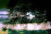 Kalt, Zweig, Sonne, Pflanzen
