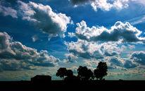 Licht, Wolken, Himmel, Pflanzen