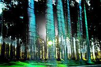 Baum, Licht, Holz, Geschwindigkeit