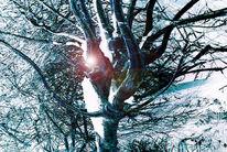 Baum, Licht, Garten, Schnee