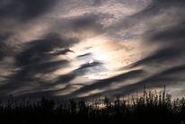 Feld, Schatten, Wolken, Pflanzen