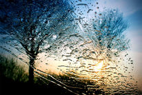 Zweig, Windschutzscheibe, Strauch, Regen