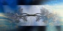 Baum, Licht, Zweig, Himmel