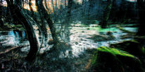 Winterkalt, Holz, Moos, Wald