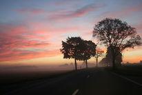 Früh, Straße, Himmel, Baum