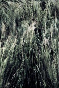 Pflanzen, Getreide, Sonne, Feld