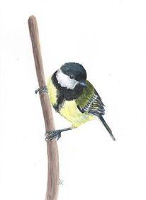 Singvogel, Vogel, Aquarellmalerei, Kohlmeise