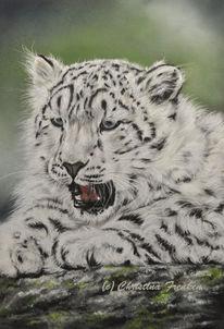 Katze, Wildtier, Zeichnung, Schneeleopard