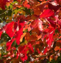 Blätter, Bad muskau, Park, Sonne