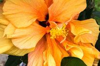 Makro, Orange, Blumen, Pflanzen