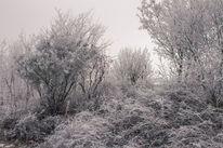Baum, Raureif, Busch, Schnee