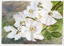 Blüte, Zweig, Weiß, Blumen