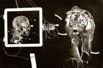 1975, Grand, Tigre, Malerei