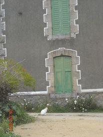 Frankreich, Katze, Susannegottschalk, Landschaft