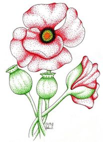 Blumen, Mohn, Pflanzen, Illustrationen